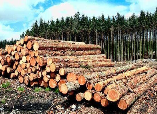 madera legal - madera ecológica - el certificado FSC ® y el certificado PEFC ™ - maderas valencia majofesa