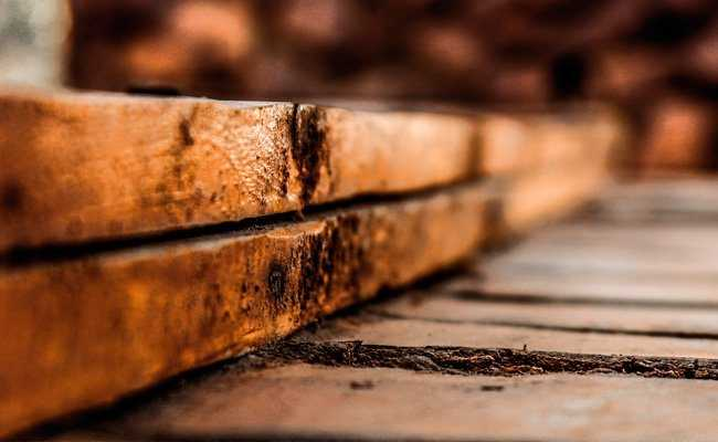 enfermedades de la madera - Majofesa