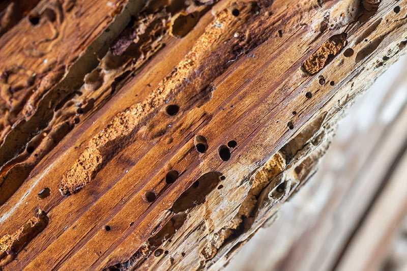 Cómo eliminar la carcoma de la madera