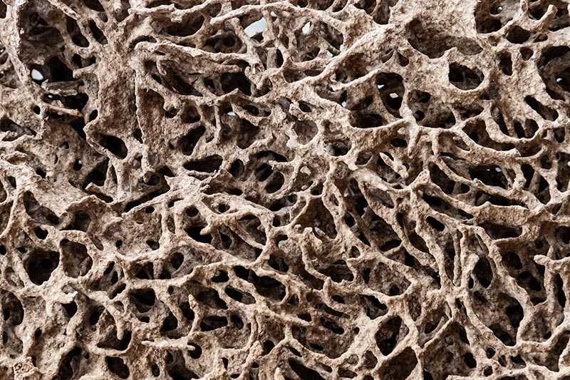 Las termitas: qué son, tipos y cómo acabar con ellas