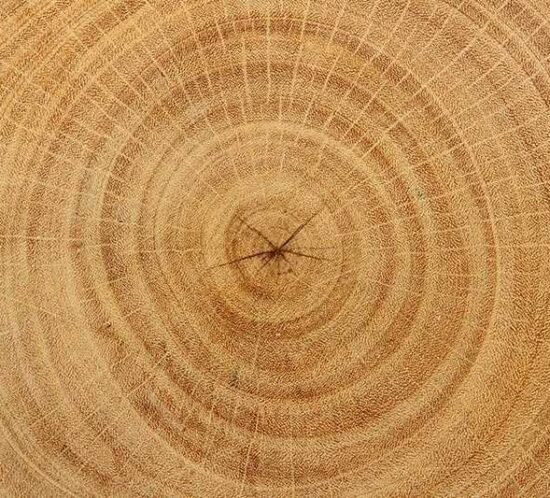 Vetas de madera